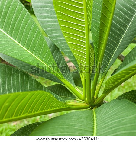 Fresh green leaf texture background . - stock photo