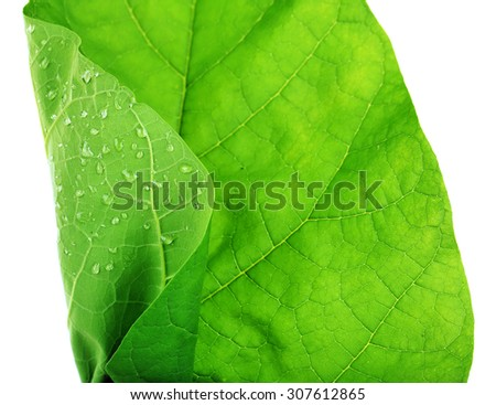 Fresh green leaf with drops on white background - stock photo