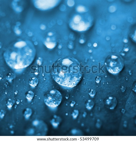 fresh green leaf with water droplets, super macro - stock photo
