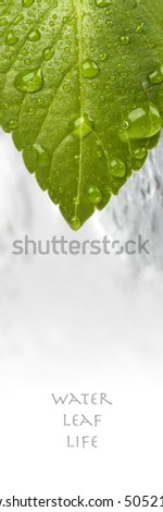 fresh green leaf with water drops - stock photo
