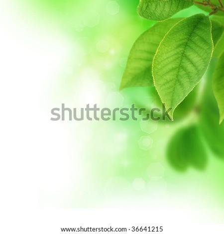 Fresh Green Leaves - stock photo
