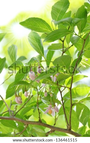 fresh green leaves and pink flower under the sun light - stock photo