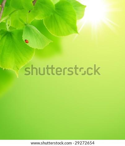 Fresh Green Leaves background - stock photo