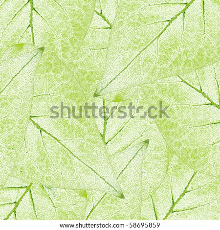 fresh green leaves border background - stock photo