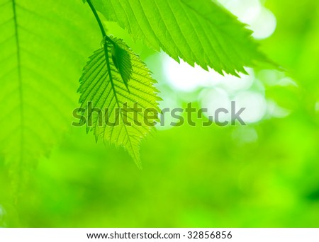 Fresh green  leaves close-up. Beautiful nature background