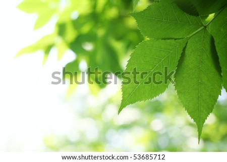 Fresh green leaves for use as background