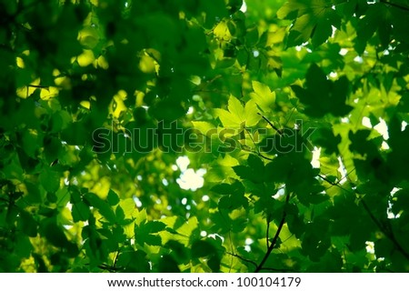 Fresh green leaves forming natural background - stock photo