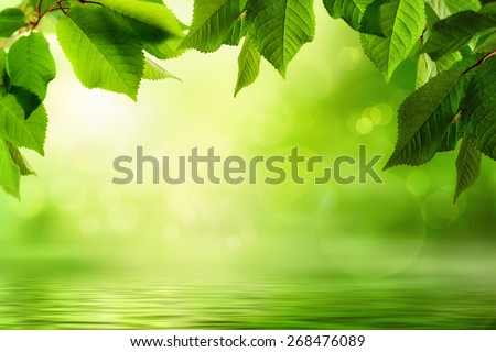 Fresh green leaves frame a beautiful out-of-focus background with sunlight flare and bokeh effects, reflected on a water surface below - stock photo