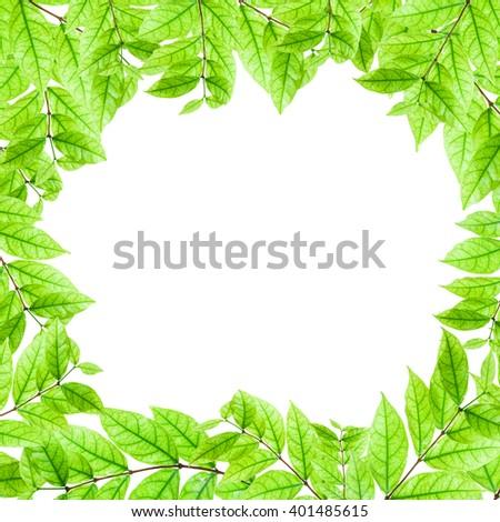 Fresh Green leaves frame isolated on white background - stock photo