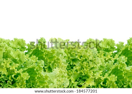 Fresh green leaves frame isolated on white background. Salad leaves frame on white background with blank space for text or image.