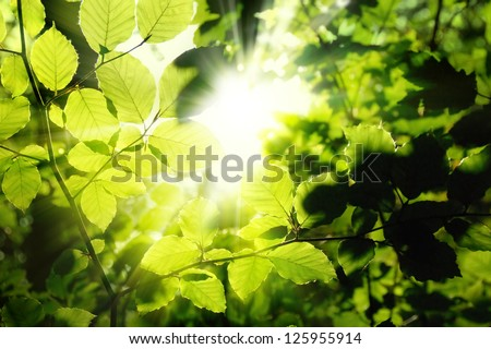 Fresh green leaves in a forest framing the sun in the middle and forming rays of light