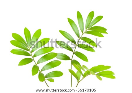 Fresh green leaves isolated on white background - stock photo