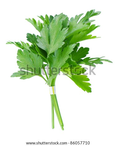 Fresh green leaves of parsley on white background - stock photo
