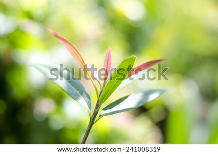 Fresh green leaves on nature backgrounds.