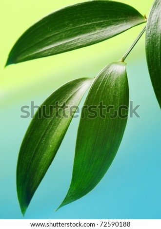Fresh green leaves over abstract background - stock photo