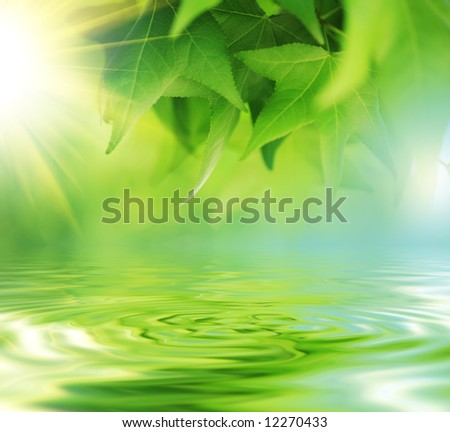 Fresh green leaves over water - stock photo