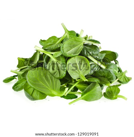 fresh green leaves spinach or pak choi isolated on a white background - stock photo