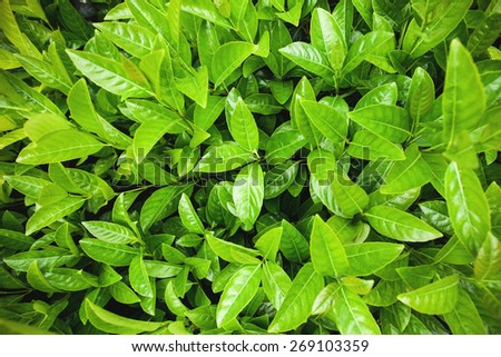 fresh green leaves, spring concept, new life of nature - stock photo