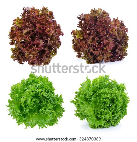 Fresh green lettuce and red lettuce leafs isolated on white background - stock photo