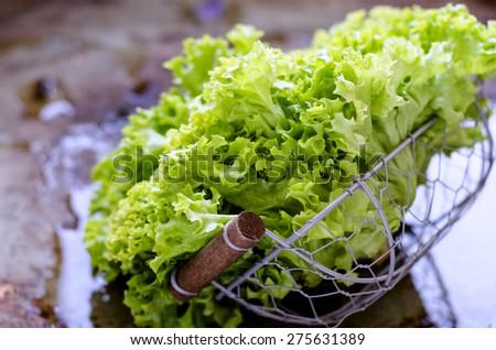 Fresh green lettuce in basket - stock photo