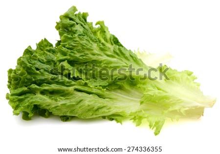 fresh green lettuce on white background  - stock photo