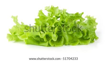 Fresh green Lettuce salad - stock photo