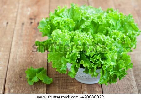 Fresh green lettuce salad in ceramic bowl. Selective focus - stock photo