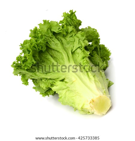 fresh green lettuce salad isolated on a white background - stock photo