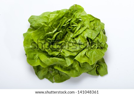 Fresh green Lettuce salad isolated on white background - stock photo