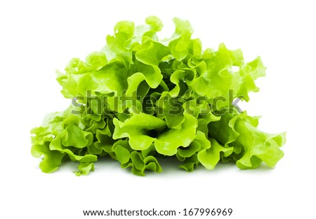 Fresh green Lettuce salad isolated on white background