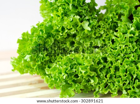 Fresh green lettuce salad leaves closeup. Salad texture