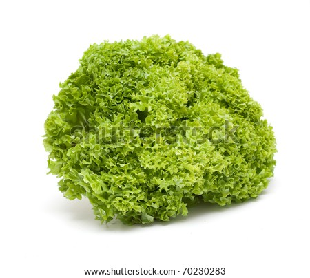 fresh green lettuce salad on white - stock photo