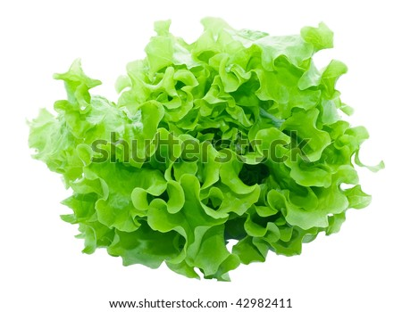 Fresh green Lettuce salad on white isolated background - stock photo