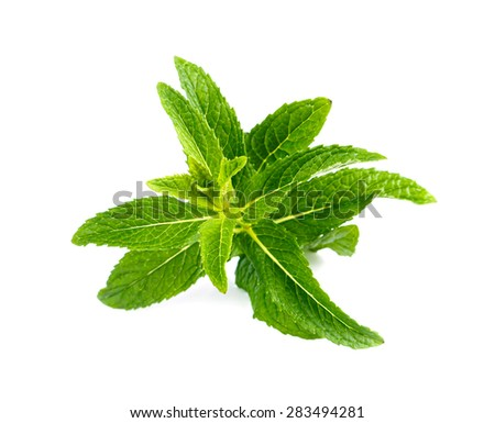 Fresh green mint. - stock photo