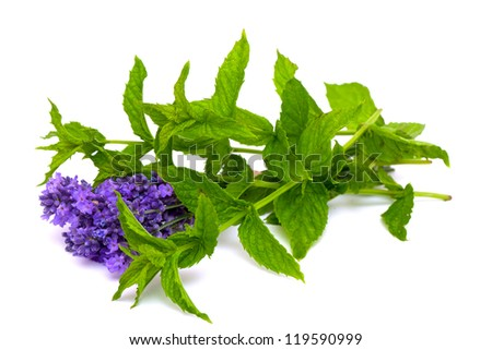 fresh green mint and lavender isolated on white