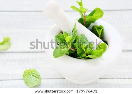 fresh green mint and mortar, herbs - stock photo