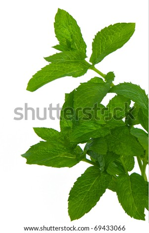 Fresh Green Mint isolated on a white background - stock photo