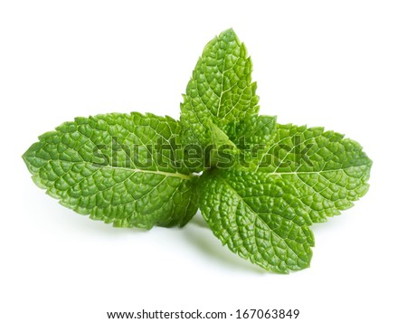 Fresh green mint leaves isolated on white background - stock photo