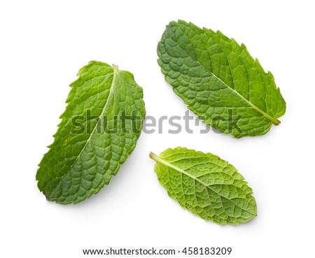 fresh green mint leaves isolated on white background, top view