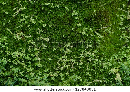 Fresh green moss on rock - stock photo