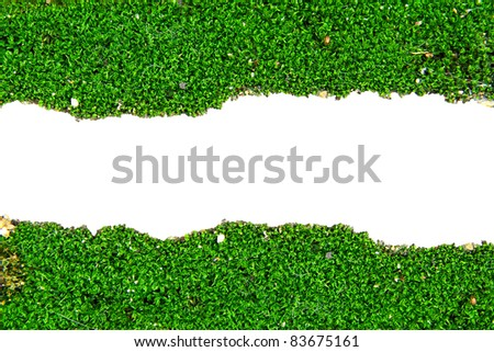Fresh green moss on white background with copy space.closeup vie - stock photo