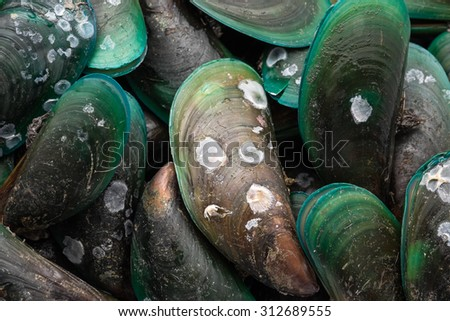 Fresh green mussels for seafood background  - stock photo