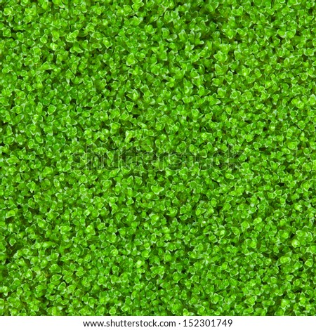 fresh green natural moss background - stock photo