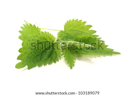 fresh green nettle on a bright background - stock photo