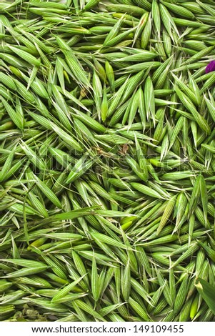 fresh green oat seeds top view surface texture close up background - stock photo