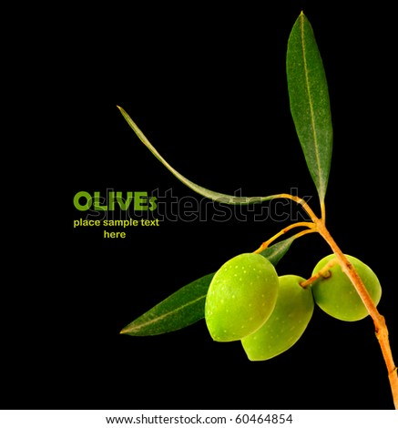 Fresh green olive branch isolated on black background - stock photo