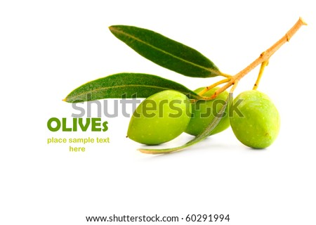 Fresh green olive branch isolated on white background - stock photo