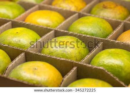 Fresh green oranges in cardboard box with sweet and sour taste with selective focused point - stock photo