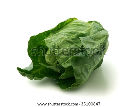 Fresh green organic pointed  cabbage