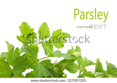 Fresh green parsley isolated on white